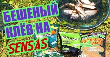 ВИДЕО - ловля плотвы на прикормки Sensas