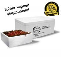 Червь долгоживущий дендробена 3,25кг - (оптовая упаковка)